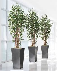 value priced 7 greenhouse artificial ficus tree at officescapesdirect