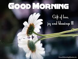 best 25 gud morning wishes ideas on gud mrng messages