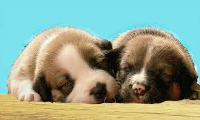 Are Dogs And Cats Color Blind Why Are Puppies Born With Their Eyes And Ears Closed Psychology