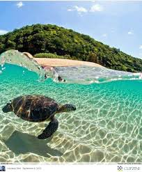 Hawaii where to travel in september images 9 best herbalife 2015 vacation images big island jpg