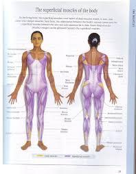 the thai massage manual free grip com 395719