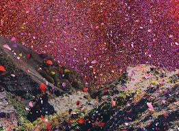 volcano flowers millions of flower petals erupted from a volcano covering an