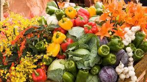 basic gardening tips for the beginners get healthy garden youtube