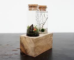 land u0026 sea terrarium set u2013 moss twig