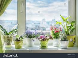 succulent house house plants on window orchid cactus stock photo 675787060
