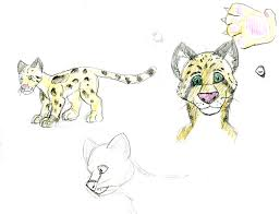 colored clouded leopard sketches the ebestiary