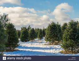 christmas tree farm snow stock photos u0026 christmas tree farm snow