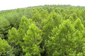 Kentucky Forest images Uk offers short course on woodland care and management uknow jpg