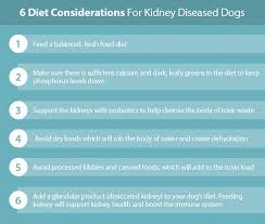 australian shepherd kidney disease kidney failure in dogs the ultimate science based guide