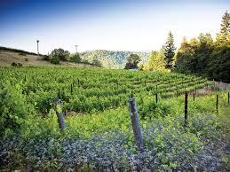 halloween city eureka ca humboldt ca new wine destination sunset