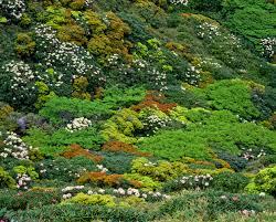 World Botanical Gardens Free Images Tree Forest Rock Lawn Leaf Flower Autumn