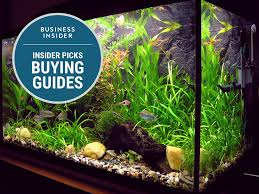 Bill Gates Aquarium In House by The Best Fish Tanks For Beginners Business Insider