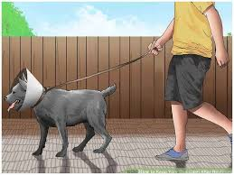 Fears A Professional How to Keep Dog In Yard