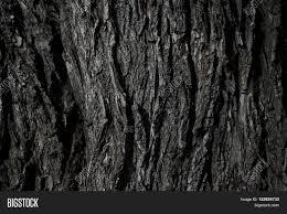 wood texture wooden image photo bigstock
