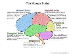 Role Of Brain Stem 869 Best Brain Images On Pinterest Brain The Brain And Neuroscience