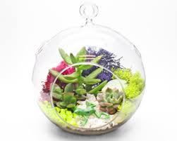 succulent terrarium in hanging glass globe franklin events