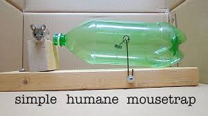 how to make a simple 2l bottle humane mousetrap that works