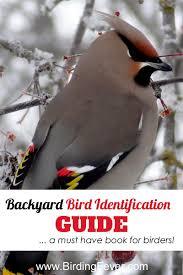 national geographic backyard bird identification guide u2022 birding fever