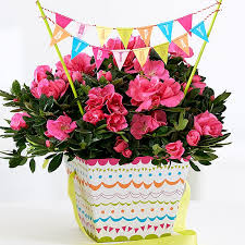 Flowers For Birthday Birthday Cake Flower Plant Image Inspiration Of Cake And