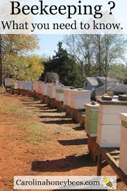 first steps in beekeeping can you do it bees beekeeping and