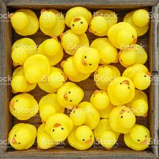 many yellow rubber ducks crowded into a wooden box stock photo