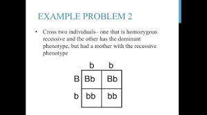 punnett square practice problems simple youtube