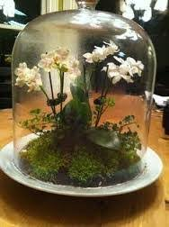 the best micro ferns mosses for a small closed plant terrarium