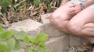 how to build a raised garden with garden pavers green savvy