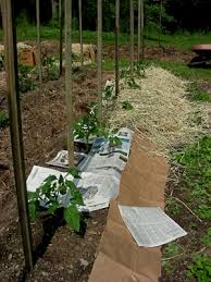 How To Make Trellis For Peas Simple Easy Trellises U2013 For Peas Beans And Tomatoes Leslie