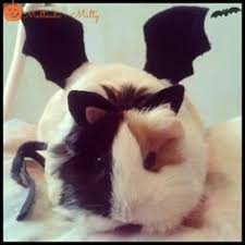 Hamster Halloween Costume Guinea Pig Hotdog Pet Halloween Costumes La Lamarmotacafe