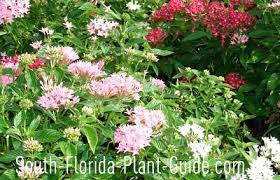 south florida perennials
