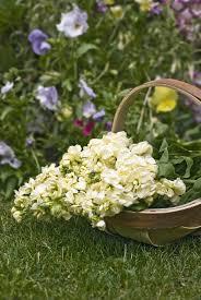 Fleurs Pour Fete Des Meres Gros Volumes U2026 Pour La Fête Des Mères