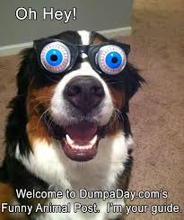funny welcome 0 0 welcome to dumpadays funny animal pictures ill be your guide