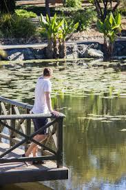 Brisbane Botanic Gardens Mount Coot Tha by Like A Local Brisbane Botanic Gardens U2013 Wander Full