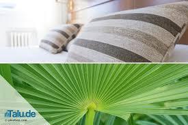 grünpflanzen im schlafzimmer pflanzen im schlafzimmer 14 gesunde zimmerpflanzen talu de