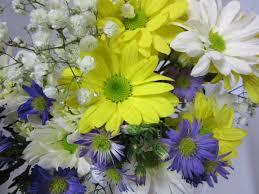 Fresh Cut Flowers A Daisy A Day