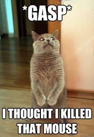 Gasp Meme - gasp cat meme cat planet cat planet