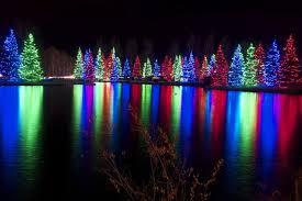uncategorized spruce lights at