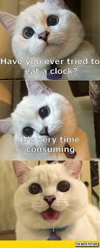 Animal Pun Meme - cat tells a joke the meta picture