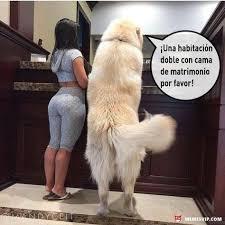 Sexy Dog Meme - meme amo a mi mascota girl sexy dog love amor chiste meme