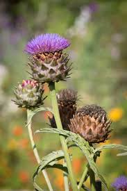 native scottish plants highland flowers and plants highland personal development