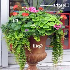 Container Water Garden Ideas Beautiful Container Garden Ideas