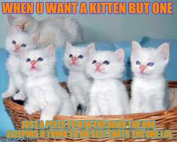 Cute Kittens Meme - white cute kittens imgflip
