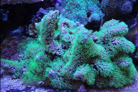 view soft corals