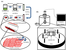 microwave assisted synthesis of fe doped nio nanofoams assembled