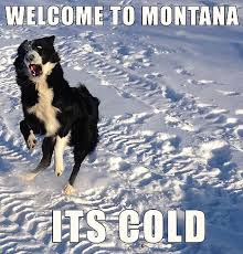 Montana Meme - cheers to cornish pasties and cold paws hollenbeck ranch