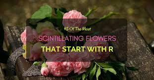 flowers that start with r best flowers and rose 2017