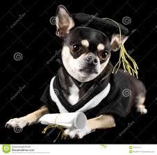 dog graduation cap and gown graduation dog stock photos image 24512113