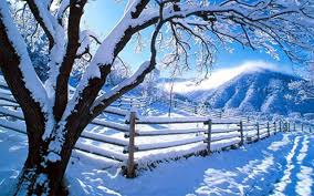 white tree and fence with snow hd nature wallpaper
