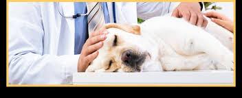 pet bereavement euthanization pet loss pet bereavement southfield mi